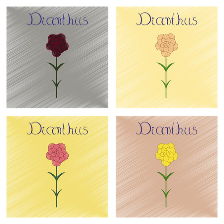assembly flat shading style Illustrations plant Dianthus