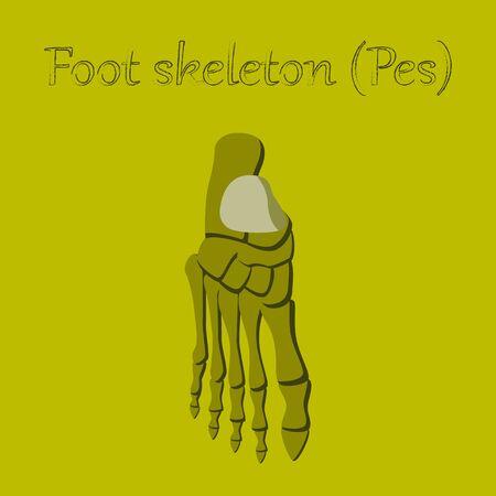 human organ icon in flat style foot skeleton