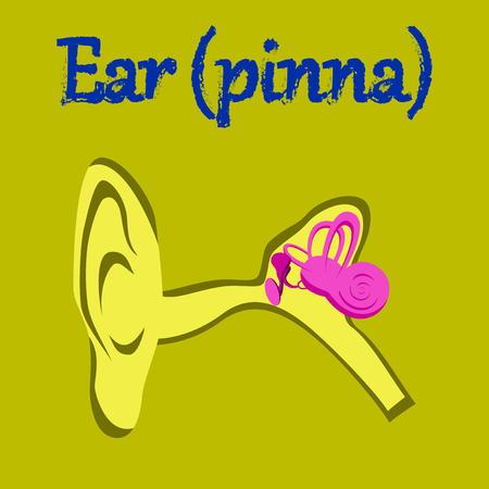 middle: human organ icon in flat style ear