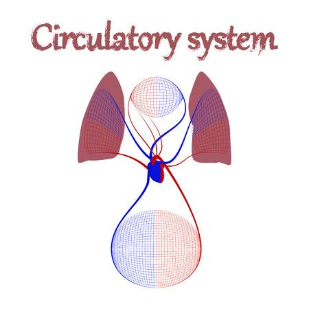 l'icona dell'organo umano in sistema circolare piatto