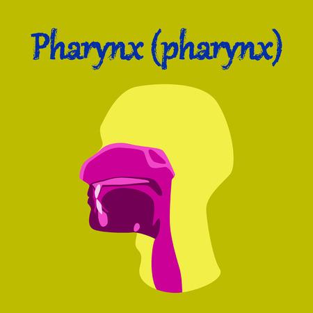 human organ icon in flat style pharynx Illustration