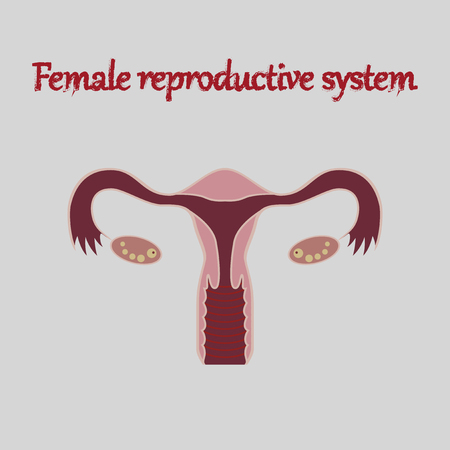 human organ icon in flat style female reproductive system Illustration