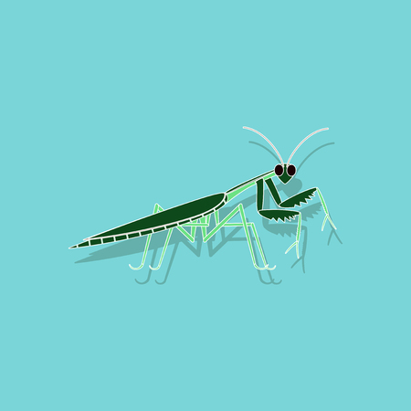 paper sticker on background of Mantis Illustration
