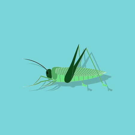 paper sticker on background of grasshopper