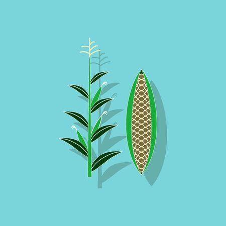 トウモロコシの背景紙ステッカー