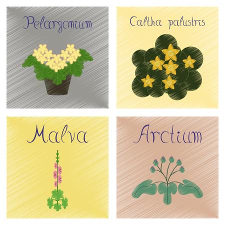 asteraceae: assembly flat shading style Illustrations Arctium Malva Caltha Pelargonium