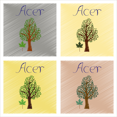Assembly flat shading style illustrations plant Acer