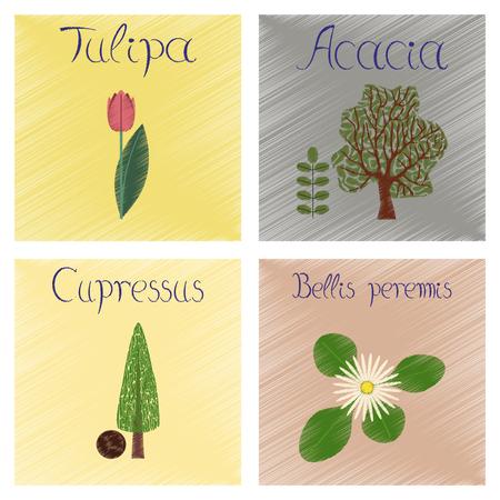 Assembly flat shading style illustrations Cupressus, Acacia, Bellis, Tulipa Illustration