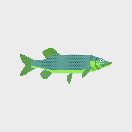 Vector illustration in flat style of a pike