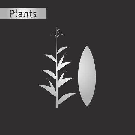 トウモロコシの黒と白のスタイル アイコン