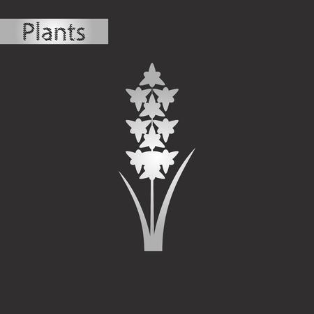 Schwarz-Weiß-Stil Ikone eines Gladiolus Standard-Bild - 85781024