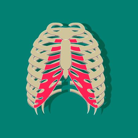 Chest thorax paper sticker