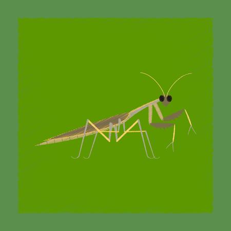 flat shading style illustration Mantis Illustration