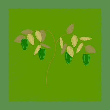 flat shading style illustration plant capsicum