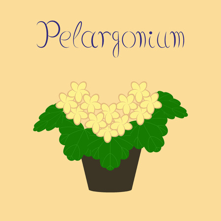 flat illustration stylish background plant Pelargonium
