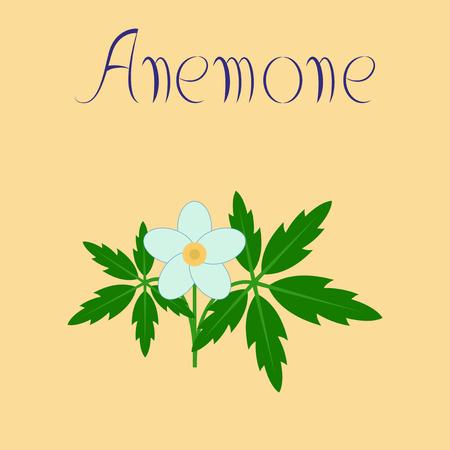 flat illustration on background flower Anemone