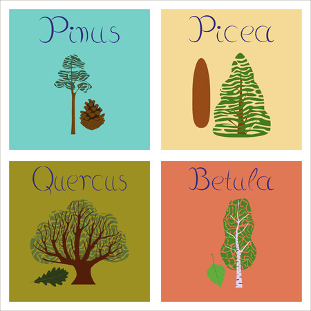 assembly of flat Illustrations Pinus Picea Quercus Betula Illustration