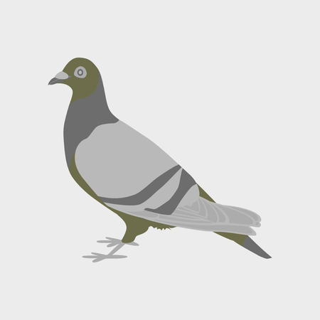 Vector illustration in flat style dove