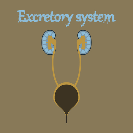 human organ icon in flat style excretory system Illustration