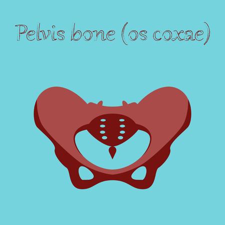 Icona dell'organo umano in ossa pelviche piatte