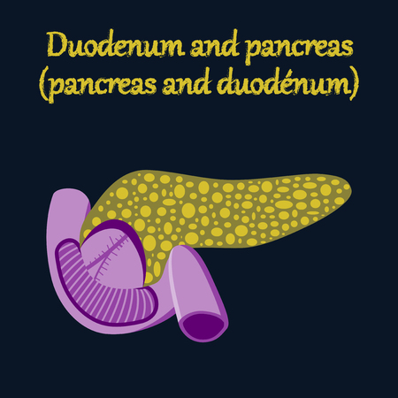 duodenum: human organ icon in flat style duodenum and pancreas