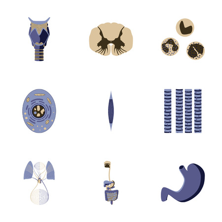 leukocyte: icons set in flat style human biology Illustration