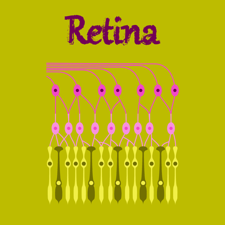 human icon in flat style structure retina Illustration