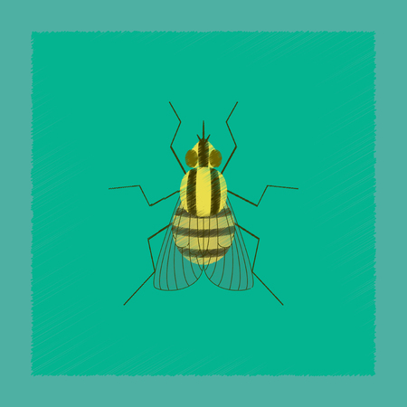 flat shading style illustration insect fly