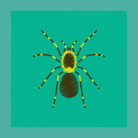 flat shading style illustration spider tarantula
