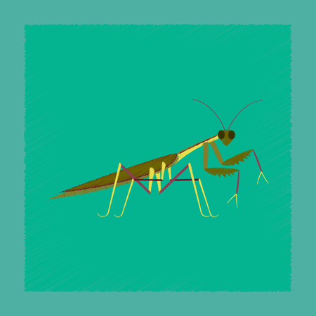 flat shading style illustration Mantis Illustration