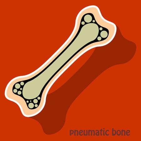 Sticker anatomy of the Long Bone with shadow.