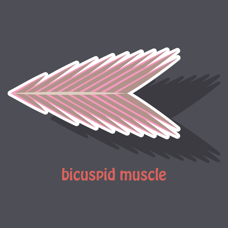 Sticker bicuspid muscle with shadow on colored background.