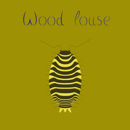 wood louse vector illustration isolated on color background.