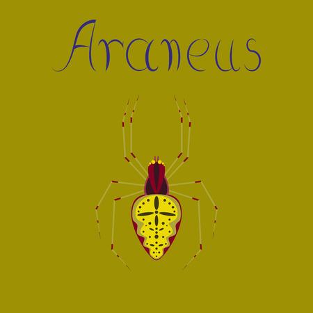 spider Araneus flat icon vector illustration on color background. Illustration