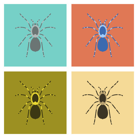 assembly flat Illustrations spider tarantula Illustration