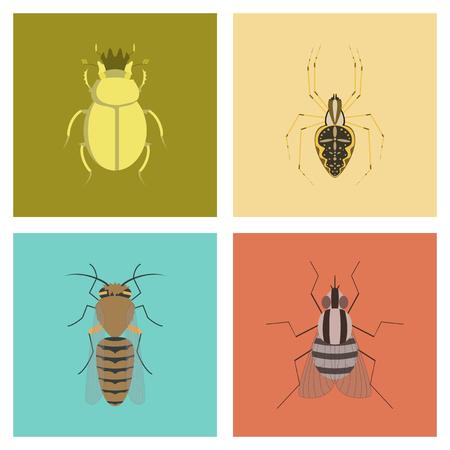 assembly flat Illustrations bug scarab Araneus bee fly