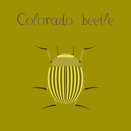 flat illustration on background Colorado beetle Banque d'images - 102384634