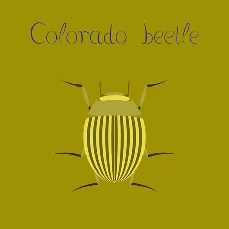 flat illustration on background Colorado beetle Illustration