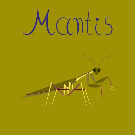 Flat illustration on background Mantis Illustration