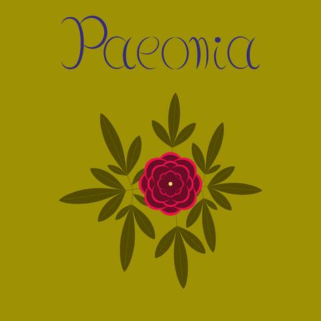 flat illustration on background flower paeonia