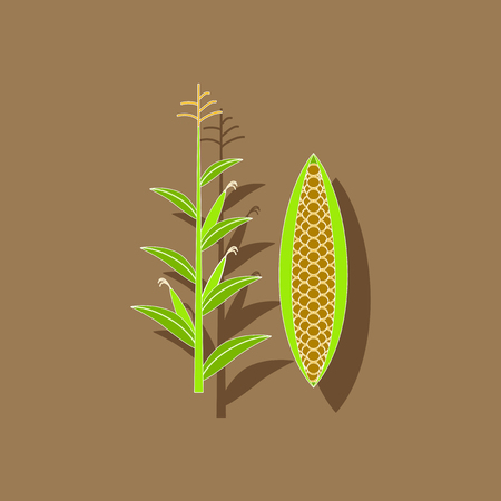 paper sticker on background of zea mays