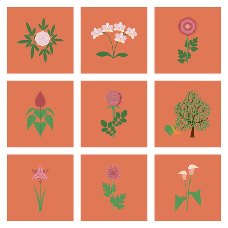assembly of flat Illustrations plant flower paeonia chrysanthemum orhidaceae rosa calla aster narcissus linden