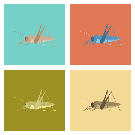 assembly of flat Illustrations bug insect grasshopper