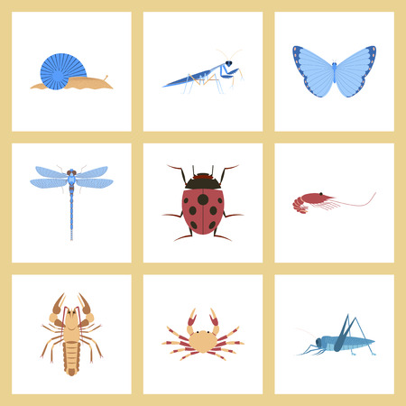 assembly flat Illustrations bug snail butterfly dragonfly ladybug