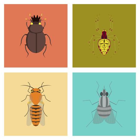 assembly of flat Illustrations egypt bug scarab Araneus bee fly