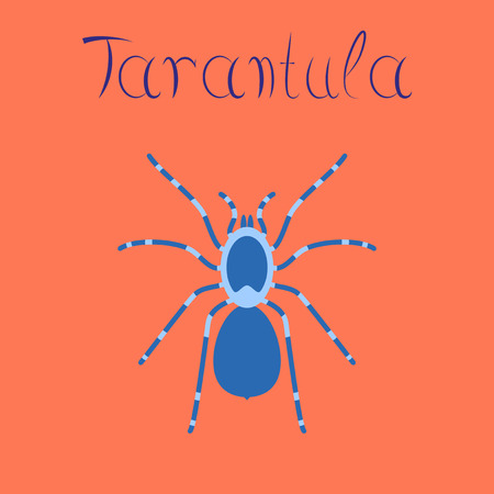flat illustration on stylish background spider tarantula Çizim