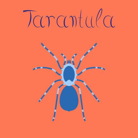 flat illustration on stylish background spider tarantula Illustration