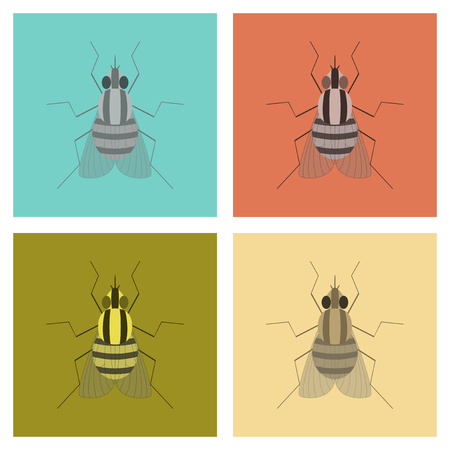 assembly of flat Illustrations biology insect fly Иллюстрация