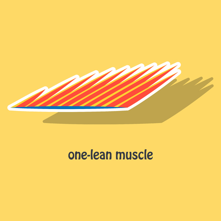 Sticker of Structure Skeletal Muscle Anatomy