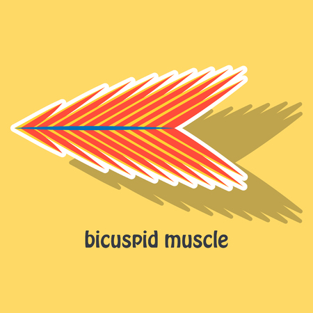 Sticker bicuspid muscle